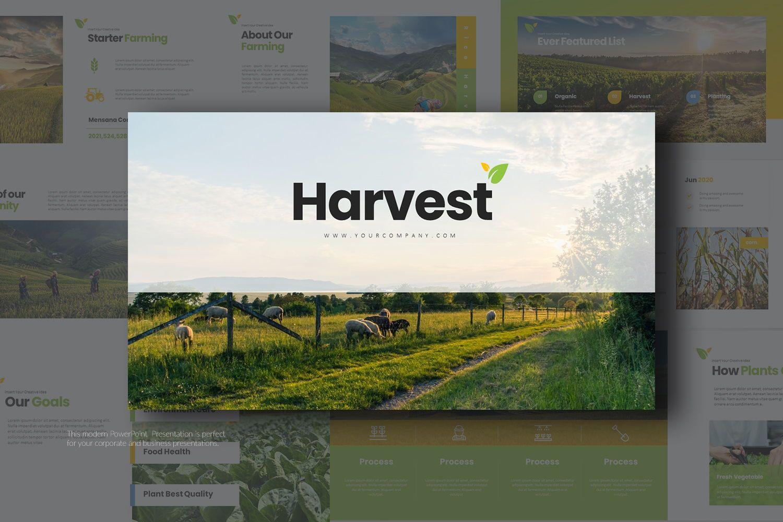 Harvest Google Slide Templates, 08191, Business Models — PoweredTemplate.com