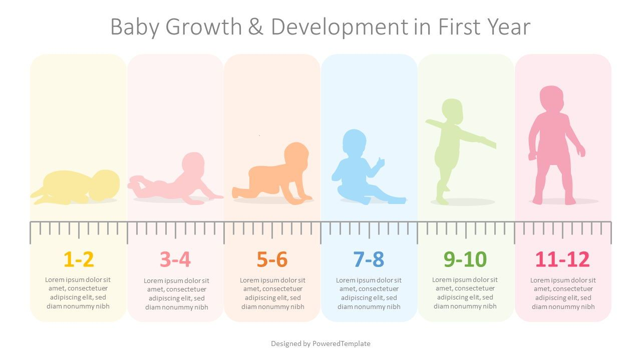 Baby First Year Development Infographic, 08355, Education Charts and Diagrams — PoweredTemplate.com