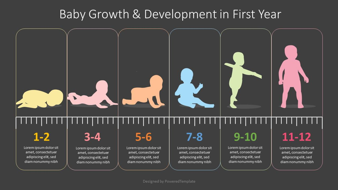Baby First Year Development Infographic, Slide 2, 08355, Education Charts and Diagrams — PoweredTemplate.com