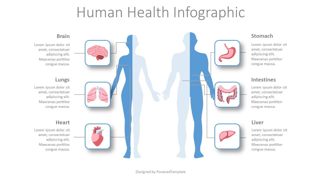 Human Health Infographic, 08429, Medical Diagrams and Charts — PoweredTemplate.com