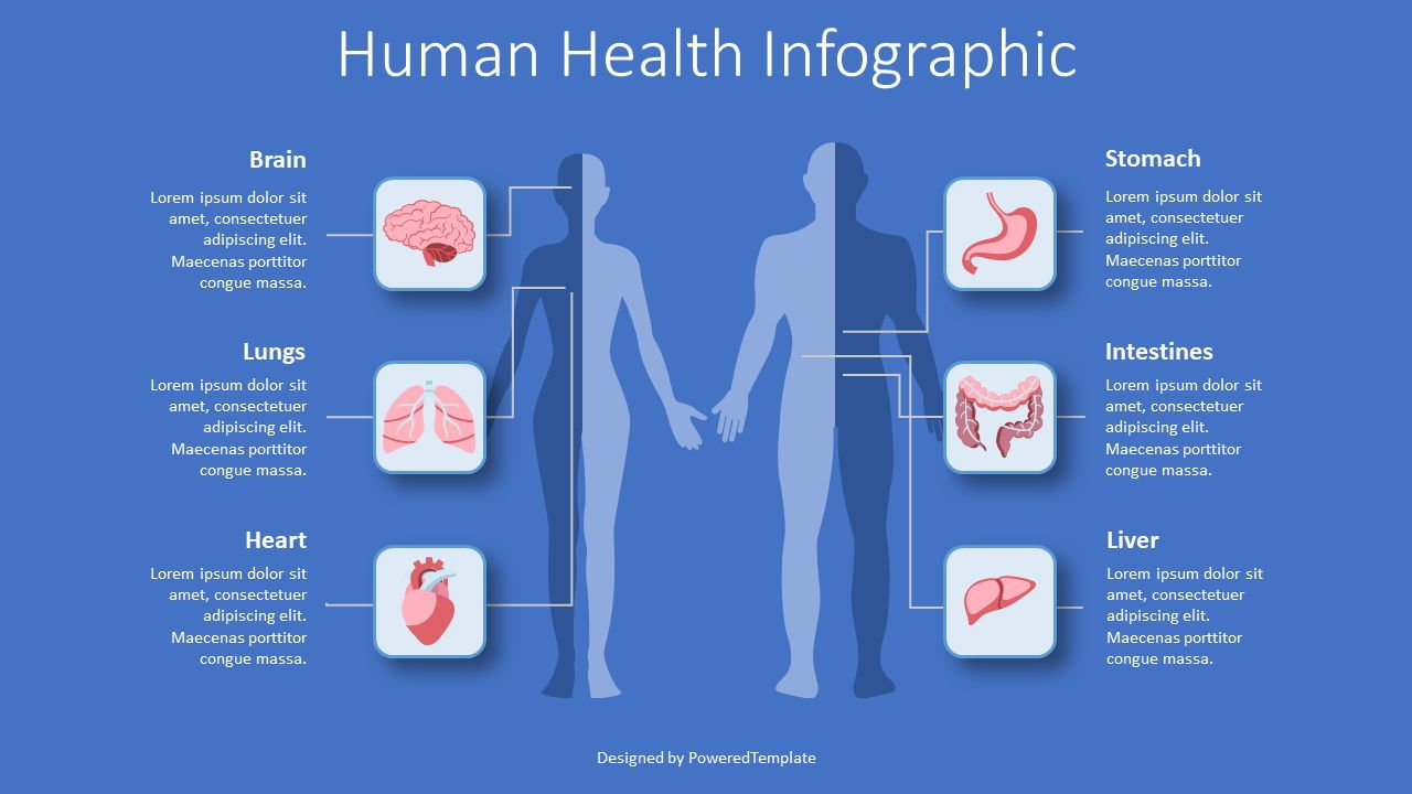 Human Health Infographic, Slide 2, 08429, Medical Diagrams and Charts — PoweredTemplate.com