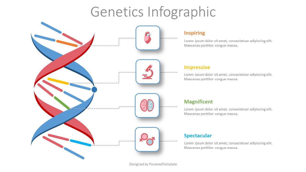 Genetics Infographic, 08435, Medical Diagrams and Charts — PoweredTemplate.com