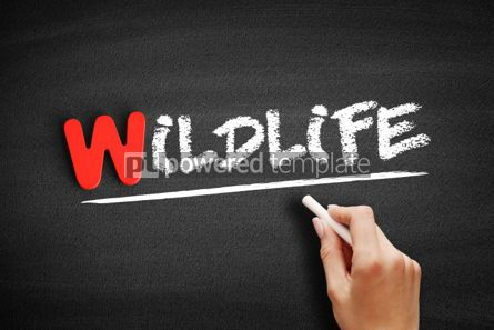 Business: Wildlife text on blackboard #00060