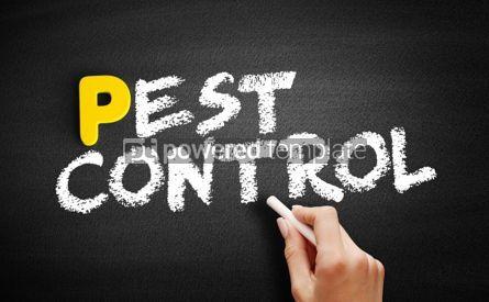 Business: Pest Control text on blackboard #00820