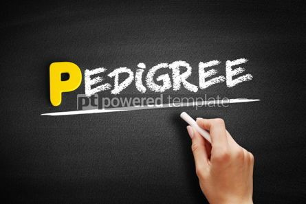 Business: Pedigree text on blackboard #00889