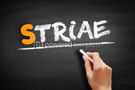 Business: Striae text on blackboard #01018