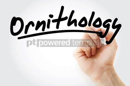 Business: Hand writing Ornithology with marker #02099