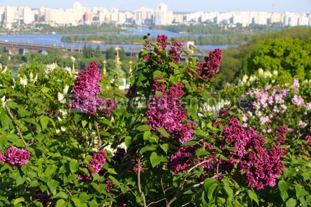 Nature: Picturesque spring view of Kyiv city Ukraine #03023