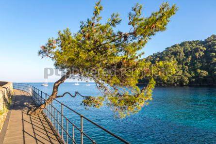 Nature: Beautiful view of the Bay of Paraggi in Santa Margherita Ligure #03082