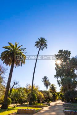 Nature: Murillo Gardens (Jardines de Murillo) in Seville city Spain #03329