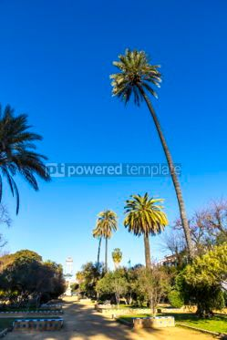 Nature: Murillo Gardens (Jardines de Murillo) in Seville city Spain #03330