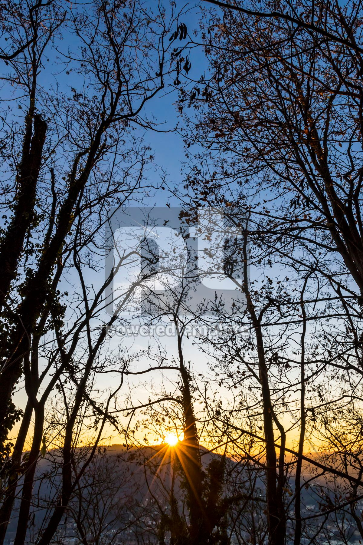 Tree branches silhouette against sunset background, 03331, Nature — PoweredTemplate.com