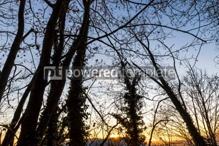 Nature: Tree branches silhouette against sunset background #03332