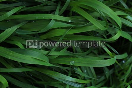 Nature: Background with tall grass #03437