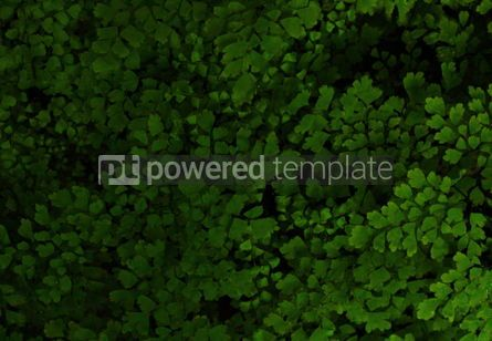 Nature: Dark background with green plants #03440