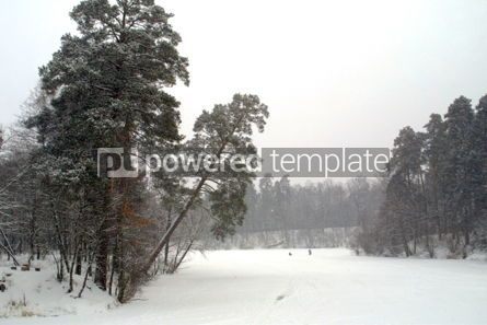 Nature: Trees in the winter park #03496