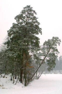 Nature: Trees in the winter park #03497
