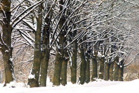 Nature: Frozen trees in winter #03498
