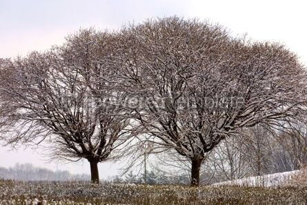 Nature: Frozen trees in winter #03500