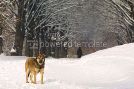 Animals: Lonely dog on the winter parkway #03506