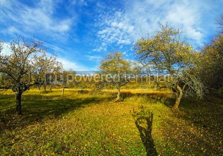 Nature: Golden autumn colours of the fruit trees in the garden #03624