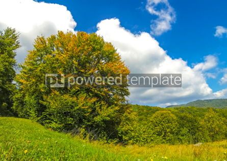 Nature: Golden autumn colours of the trees in Carpathian mountains Ukra #03626