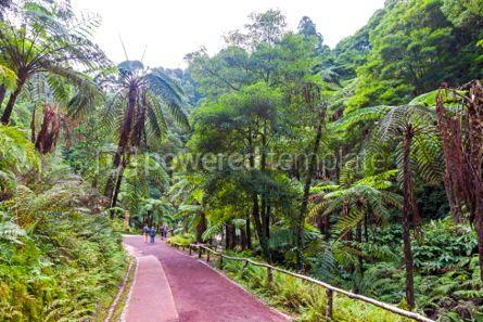 Nature: Natural Park Caldeira Velha on Sao Miguel island Azores Portug #03649
