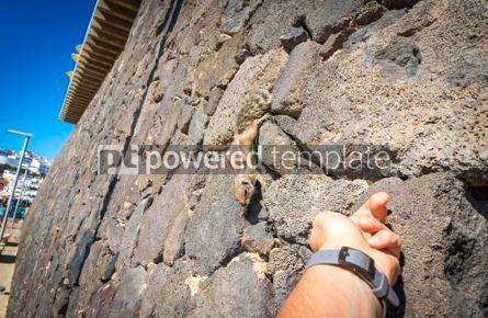 Animals: Barbary Ground Squirrel on Fuerteventura island Canaries Spain #03767