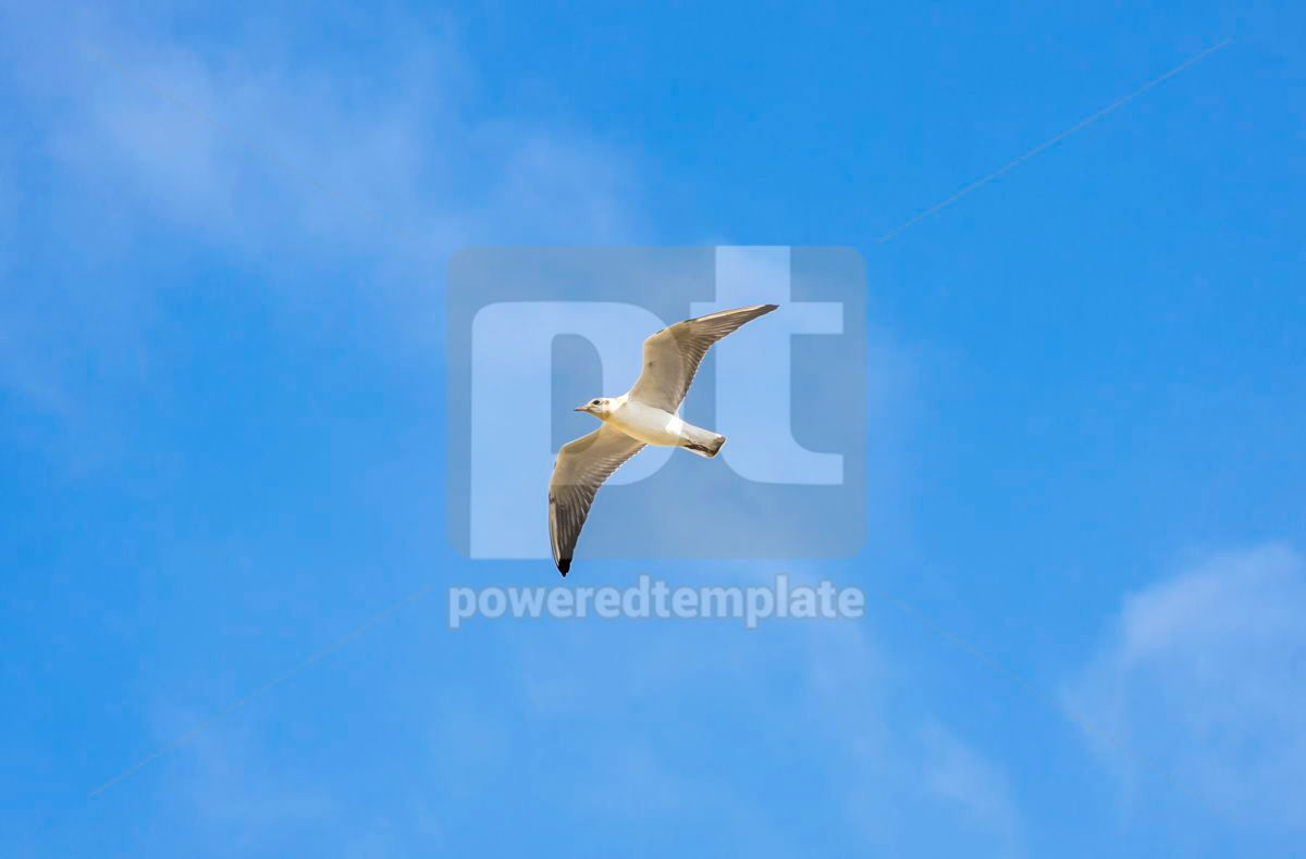 Silver seagull in flight against a blue sky background, 03769, Animals — PoweredTemplate.com