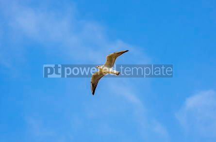 Animals: Silver seagull in flight against a blue sky background #03769