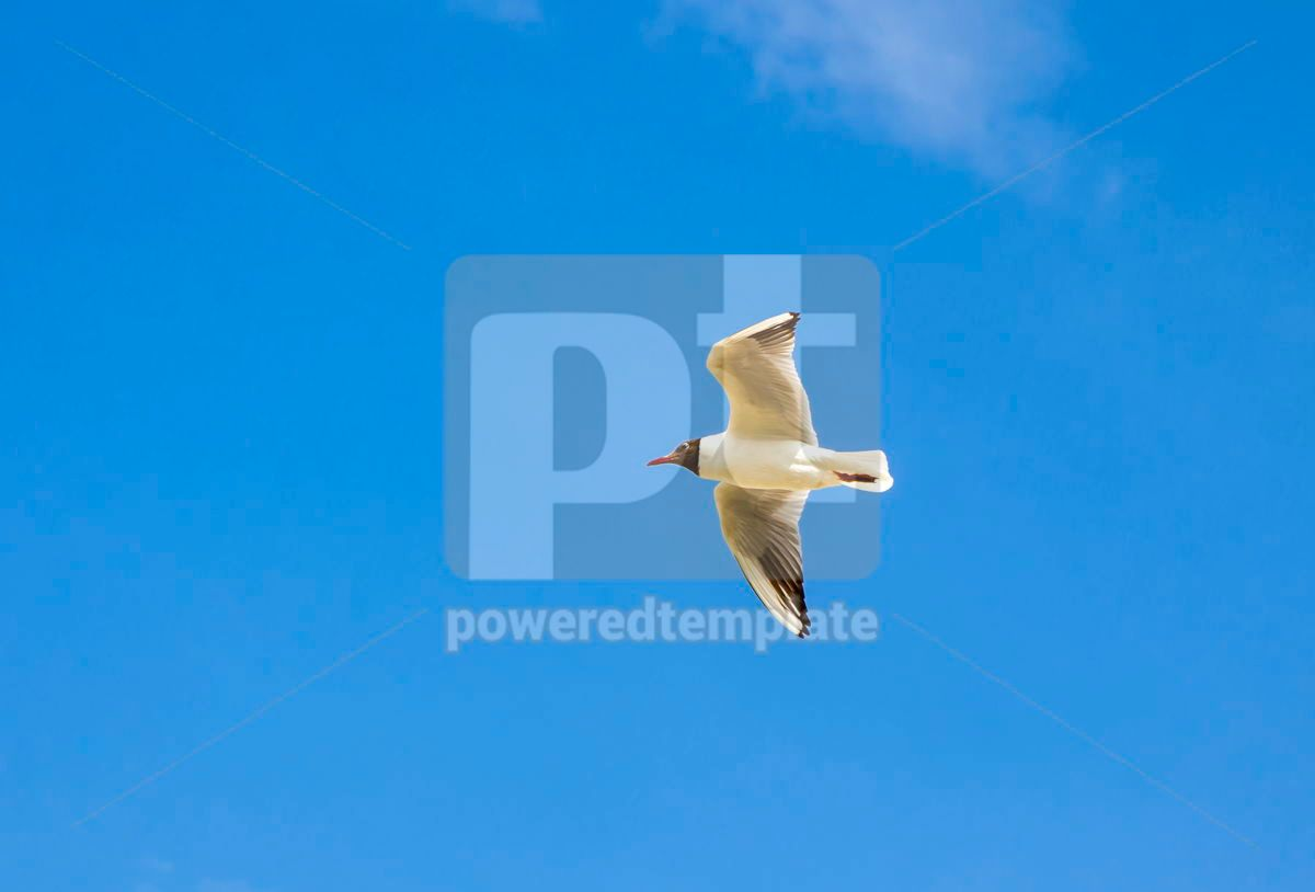 Silver seagull in flight against a blue sky background, 03770, Animals — PoweredTemplate.com