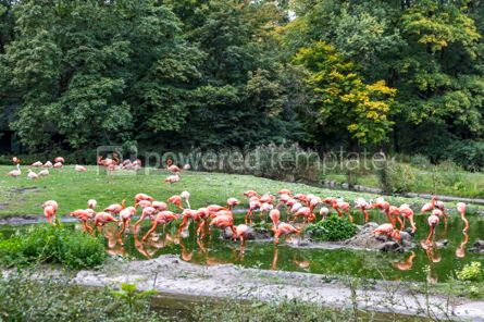 Animals: Pink flamingos in nature #03776