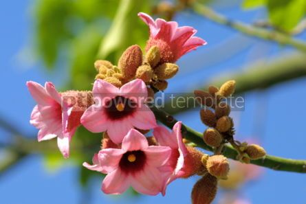 Nature: Pink flowers #03872