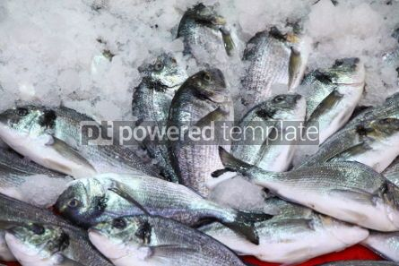 Food & Drink: Herring fish in ice on a market stall #03902