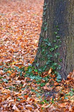Nature: Autumn forest landscape with tree trunk and fallen leaves #03945