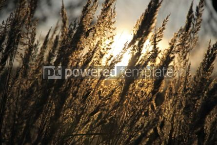 Nature: Wild meadow of dry herb grass on sunset soft sun rays #03946