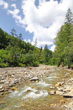 Nature: Small mountain river flowing through the fir forest in Carpathia #04089