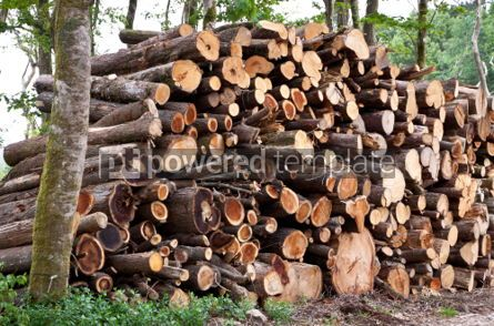 Nature: Pile of raw pine wood logs #04099