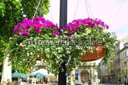 Nature: Hanging flowers on a street of Lviv city Ukraine #04214