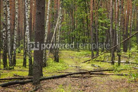 Nature: Summer mixed forest with walkway green grass and trees #04239