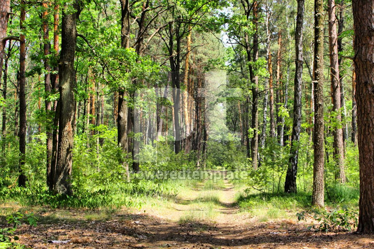 Summer mixed forest with walkway green grass and trees, 04243, Nature — PoweredTemplate.com