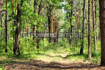 Nature: Summer mixed forest with walkway green grass and trees #04243