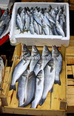 Food & Drink: Bulk of fresh sprats on a market stall #04264