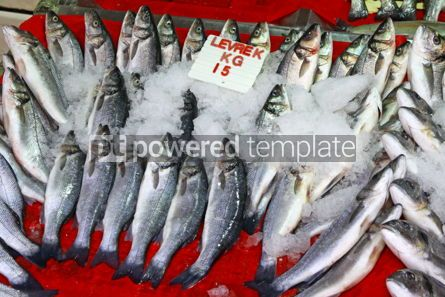 Food & Drink: Seabass fish in ice on a market stall #04267