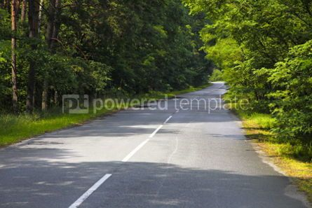 Transportation: Curve road through the forest #04317