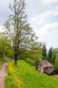 Nature: Schlossberg park in Freiburg im Breisgau city Germany #04326
