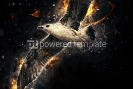 Abstract: Seagull in flight. Artistic grunge fury effect #04491