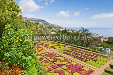 Nature: Tropical Botanical Garden in Funchal Madeira island Portugal #04509