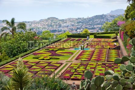 Nature: Tropical Botanical Garden in Funchal Madeira island Portugal #04510