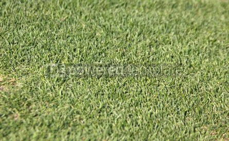 Sports : Green grass on a football soccer field #04591